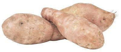 Come Fiore Piante da patate dolci