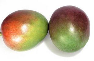 Tipi di alberi di mango