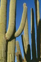 Nomi botanici per le piante succulente