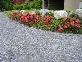 In rapida crescita piante per un giardino
