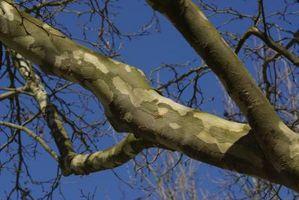 Quali alberi è terreno alcalino Per?