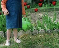 Bordi in cemento delle aiuole di fiori