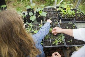 Come coltivare piante Starter per un profitto