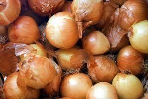 Cipolla germogli non sono germinazione