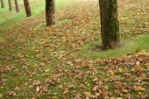 Come usare le foglie come pacciame per un orto