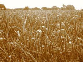 Modi per preparare Wheatgrass Juice