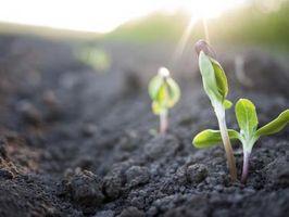 Come microonde influenzano Pianta semi?