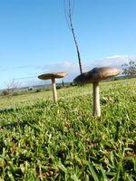 A proposito di funghi che crescono nel prato