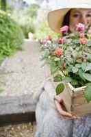 Che cosa rende Buono Giardino del suolo?
