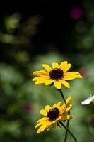 Caduta di fioritura perenni in Zona 3