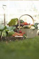 Elenco di giardino comune verdura