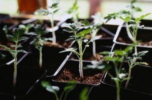 Come fare terriccio per la germinazione dei semi