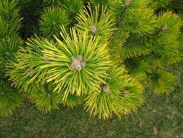 Tipi Arbusto & Bush