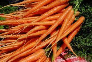 Quando piantare i semi di carota?