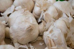 Come coltivare aglio e scalogno