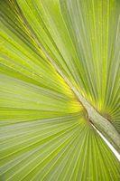 Palm Trees che possono tollerare blocca