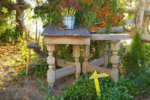Quando iniziare Piante Summer Garden interna?