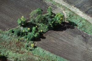 Che alberi sono i migliori per barriere di vento?