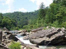 Che tipo di cedro alberi crescono in Tennessee orientale?