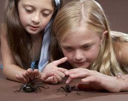 Il modo migliore per sbarazzarsi di casa comune ragni che sono sicuri per gli animali domestici