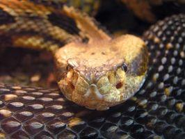 Come per respingere serpenti con una recinzione elettrica