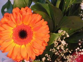 Come scegliere i fiori per appendere cesti