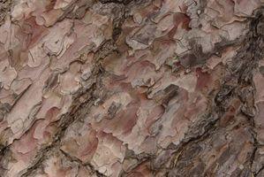 Ruggine sulla corteccia di albero