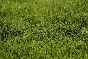 Che cosa è Quicklawn Grass Seed?