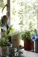 Come aggiungere le piante a una finestra in salotto