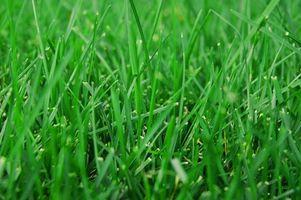 Come piantare semi di erba per Shade