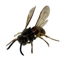 Nidi api nel prato