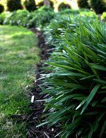 Come coltivare Erba in terreno acido