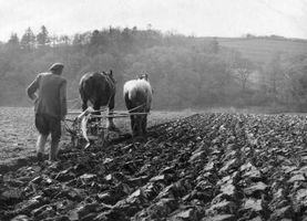 Come per arare un campo senza un trattore