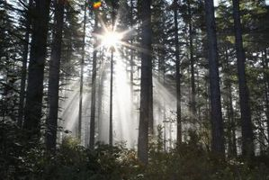 È naturale o Full Spectrum luce migliore per le piante?