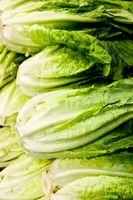 Insects che mangiano verdura giardino