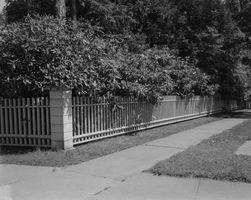 Arbusti Per nascondere un recinto