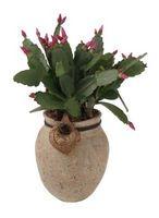 Come per fertilizzare Succulente