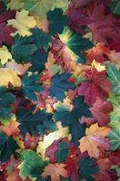 Girando di foglie in autunno