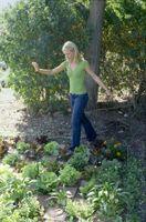 Cosa posso usare per uccidere le erbacce nel mio Orto che non ucciderà le mie piante?
