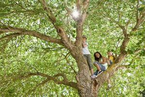 Danni insetti sulle foglie degli alberi