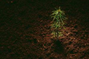 Tubi per piccoli alberi