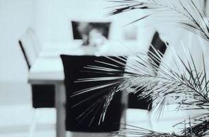 Le piante di palma si stanno prosciugando & Morire