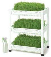 Come coltivare Wheatgrass Seeds