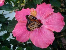 Butterfly Gardens & Arbusti giapponesi