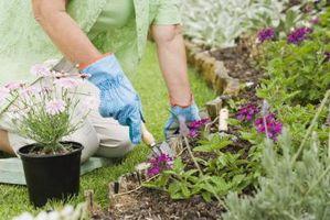 Tipi di terreno per coltivare le piante