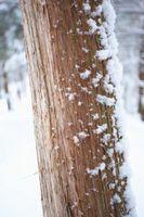 È possibile utilizzare cedro rosso occidentale Picchetti per interni Usa?