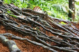 Micorrize Supplemento sulla crescita degli alberi