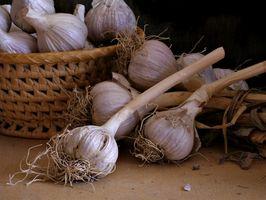 Come coltivare aglio
