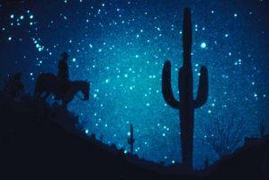 Cosa mangia l'Saguaro Cactus?