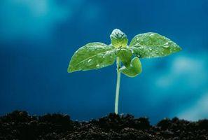 Come far germinare i semi di verdure interna